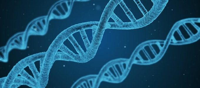 การปรับเปลี่ยนพันธุกรรมความฝันหรือความจริงในอนาคตอันใกล้
